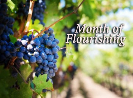 You are currently viewing Month of Flourishing